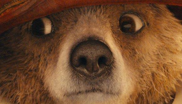 Paddington Bear Flayrah
